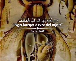 Mjalti është shërim, sot shkenca zbulon që mjalti është shërim për shumë sëmundje