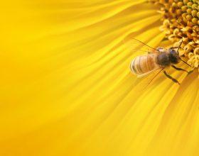 Dobitë e pjalmit të luleve