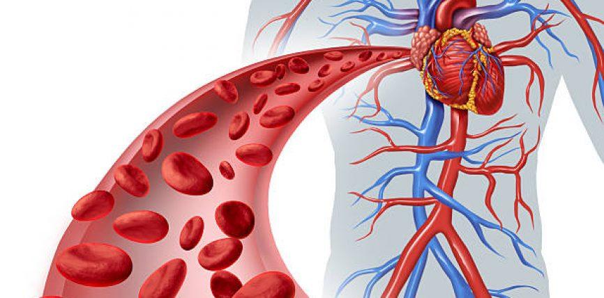 Si të shëroni me kurat natyrale sëmundjet e zemrës dhe gjakut