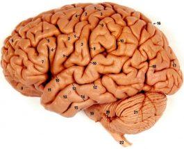 Kurani është shërim nga sëmundjet psikologjike, si stresi, depresioni, ankthi