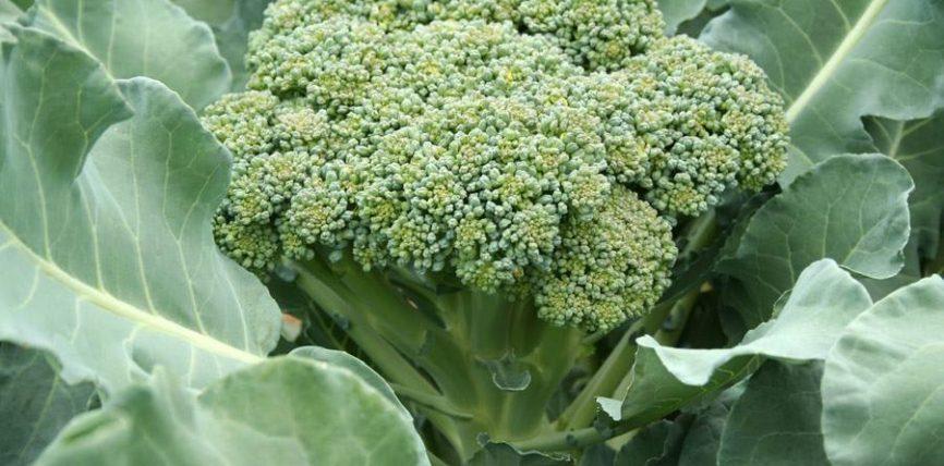 Brokoli dhe lakra kundër sëmundjeve