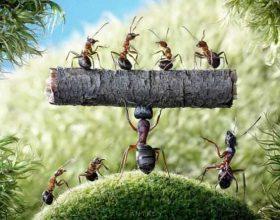 Komandanti,milingona dhe optimizmi