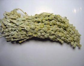 Sideritis reaseri (Caj Mali)