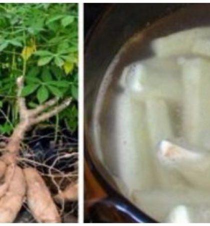 A e dinit se kjo bimë është kura më potenciale ndaj kancerit dhe infertilitetit?