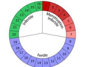 Sa zgjasin menstruacionet normale?