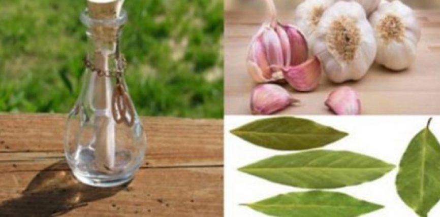 Kjo është e pabesueshme! Unë kurrë nuk mendoja se 7 gjethe dafine me 7 thelpinj hudhra brenda një shisheje, do të kalonin këtë!