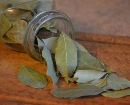 Rrallë kush e di: gjethet e dafinës dhe vetitë shëruese të saj