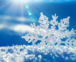 Gjynahet dhe bora
