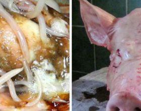 Ja cfarë i ndodh trupit tuaj pasi hani mish derri. Faktet do t'ju trondisin !