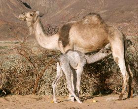 """""""A nuk i shikojnë devet se si janë krijuar?"""