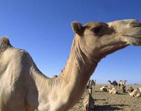 A nuk i shikojnë devet se si janë krijuar ? Krijimi i deves është një mrekulli në vete
