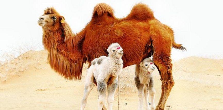 """""""Bashkëshortja ime lindi foshnje të zezë"""",ja cfarë shpjegimi shkencor i bëri Muhamedi alejhi selam"""