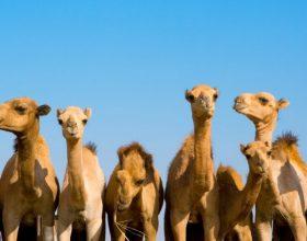 Si ndahen devetë?