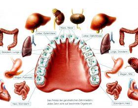 Dhëmbët dhe trupi!