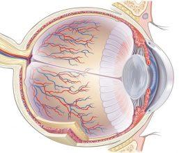 Pse dridhet qerpiku i syrit ?