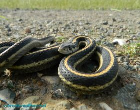 2 Lloje gjarpërinjsh që kur e shikojn njeriun ,njeriu vdes