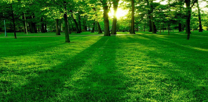 Shikimi në gjelbërim dhe ujë qetëson syrin