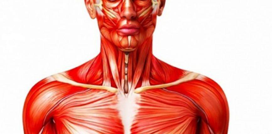 Efekti i pabesueshëm që pijet energjike kanë në trupin tonë