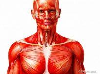 Mbi sëmundjet e zemrës