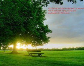 Sa e falenderojmë Allahun për shikimin që na ka dhuruar?