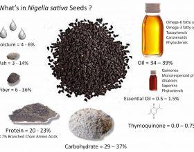 Çka thotë shkenca e çka feja për nigella sativën (Fara e zezë)?