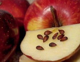 Farat e mollës dhe shërimi: E vërteta që fshihet pas tyre