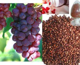 Rrushi i thatë na jepë fuqi, qetëson, i forcon nervat dhe marrëdhëniet seksuale i bën të këndshme