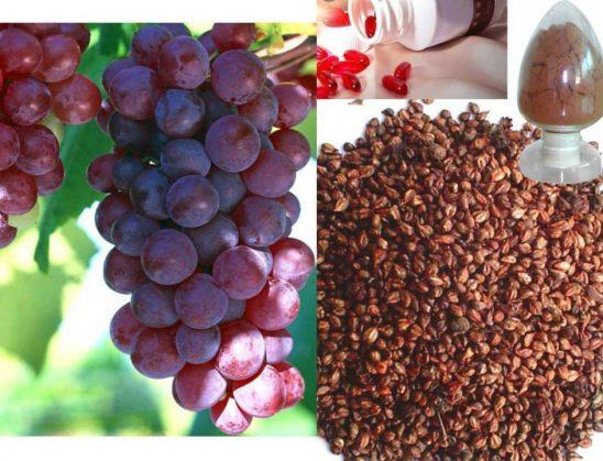 Rrushi, përmendet 11 herë në Kur'an