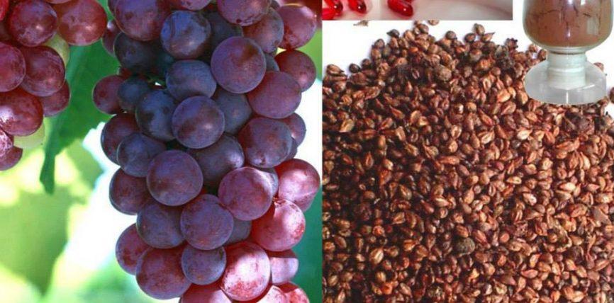Perfitimet nga farat e rrushit