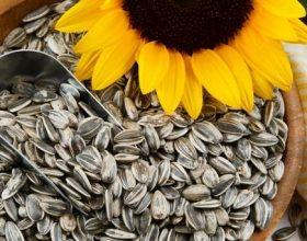 Drithëra + fara luledielli – Imunitet më i mirë
