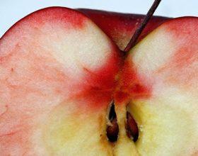 Ju helmojnë apo ju bëjnë mirë farat e mollëve?