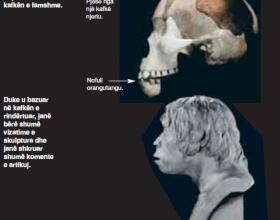 Bie poshte teza e prejardhjes nga majmuni! Zbulohet mashtrimi i madh i evolucionit! Ja sesi falsifikoheshin fosilet