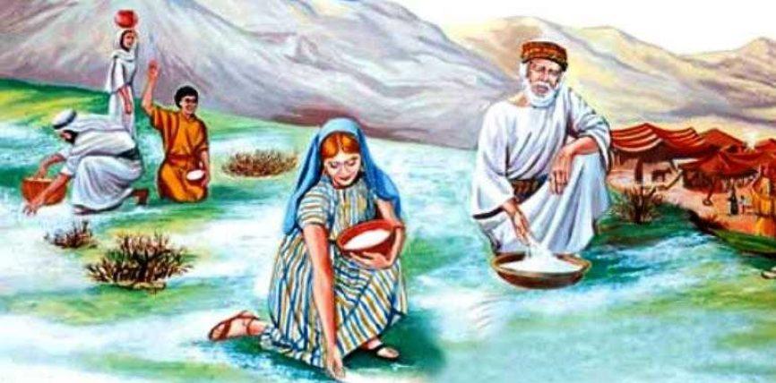 Mana (rrëshira) ushqim i Musait alejhi selam dhe popullit të tij