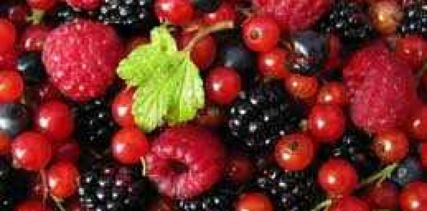 Frutat e pyllit ulin për 40% rrezikun nga parksonizmi