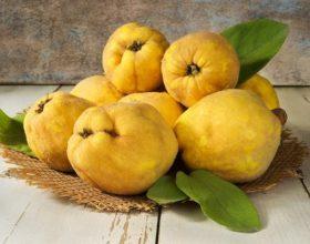 Ftoi, Fruti mbret i vjeshtes