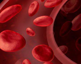 Mrekullia e trupit njerëzor: gjaku përshkon 100 mijë kilometra në 23 sekonda