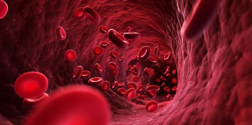 Mrekullia gjakut në trupin tonë!