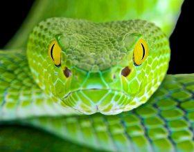 Natyra e gjarpërit është kafshimi, por kjo nuk do e ndryshojë natyrën time e cila është ndihma