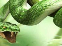 Ëndrrat,magjia dhe gjarperi