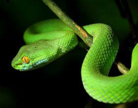 Çfarë do të thotë të shikosh gjarprin në ëndërr?