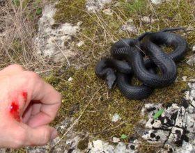 Një njeri e pa një gjarpër në zjarr dhe vendosi ta hiqte…