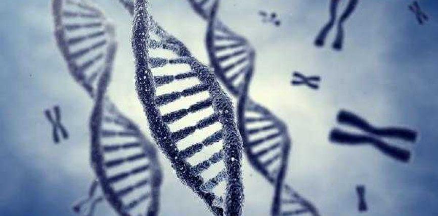 Programimi në gjene-Mrekulli shkencore nga Kur'ani