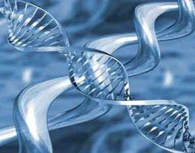 Gjenetika dhe çudia e Kuranit