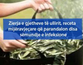 Zierja e gjetheve të ullirit, receta mijëravjeçare që parandalon disa sëmundje e infeksione