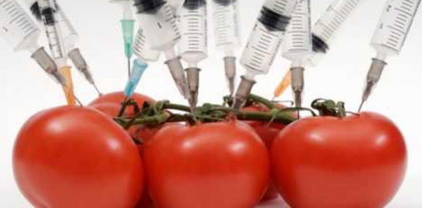 Ushqimet e modifikuara gjenetikisht, rrezik apo jo për qenien njeri