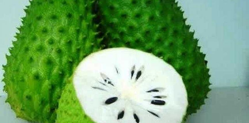 Graviola bima e cila shëron kancerin…!?