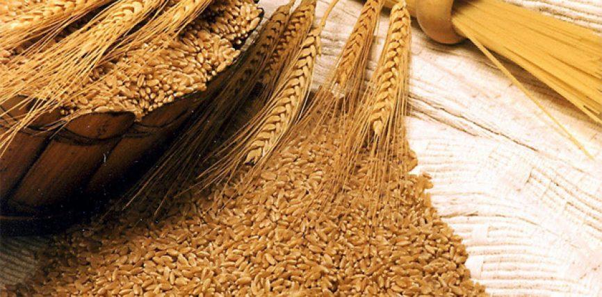 Vitamin E vaj nga gruri