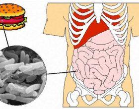 Helmimet në ushqim ,kujdes me higjenën dhe fastfoodin!