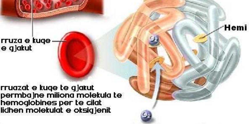 Molekula mahnitëse e hemoglobinës – një mrekulli e krijimit