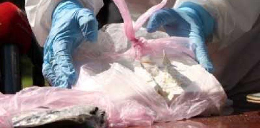 """Në """"Air France"""" zbulohen 1.3 ton kokainë e pastër"""